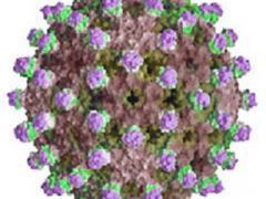 Австралийский гепатит