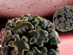 Папилломавирус и беременность. Стоит ли переживать?