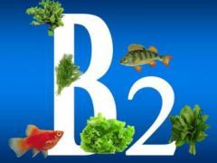Витамин Рибофлавин