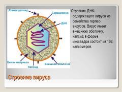 Вирусная или бактериальная инфекция по анализу крови