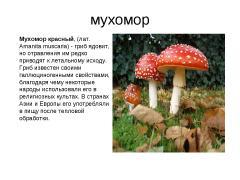 гриб мухомор лечебные свойства