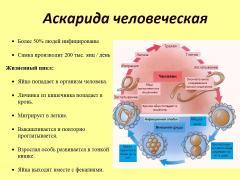 аскарида человеческая симптомы