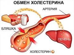 холестерин польза и вред