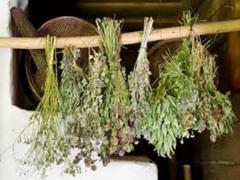 травы от язвы желудка