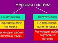 различия соматической и вегетативной нс