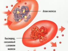 роль железа к системе кровообращения