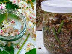 настойка цветов кашатана для лечения вен