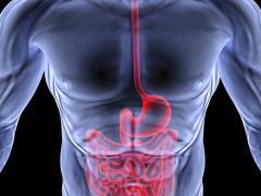 В кишечнике человека обитает множество микроорганизмов