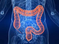 Кишечник является самым длинным отделом кишечника