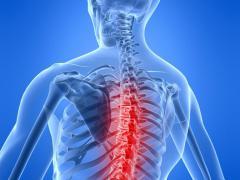 Подреберные мышцы выполняют ряд функций