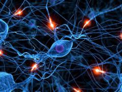 Автономная нервная система регулирует висцеральные функции