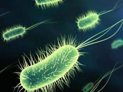 Бактерия имеет длительный жизненный цикл