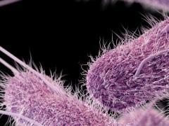 Сальмонеллез возникает по причине бактериальной инфекции