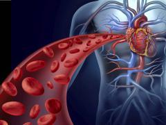 Организм пронизан кровеносными сосудами