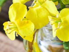 Рапсовое масло может быть основой косметических средств