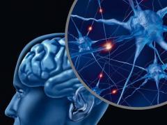 Человеческий мозг является уникальным органом