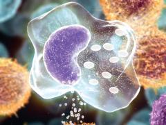 При воспалении количество лимфоцитов снижается