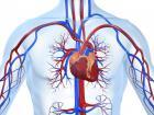 Стенокардия отличается давящей болью в груди