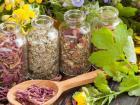 Лекарственные растения являются даром природы