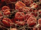 Буферная система крови осуществляет контроль уровня рН
