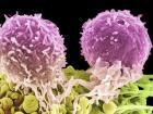 Лейкоциты являются белыми кровяными тельцами