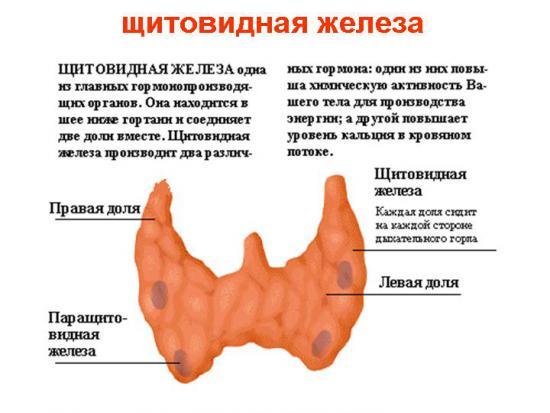 Перешеек щитовидной железы
