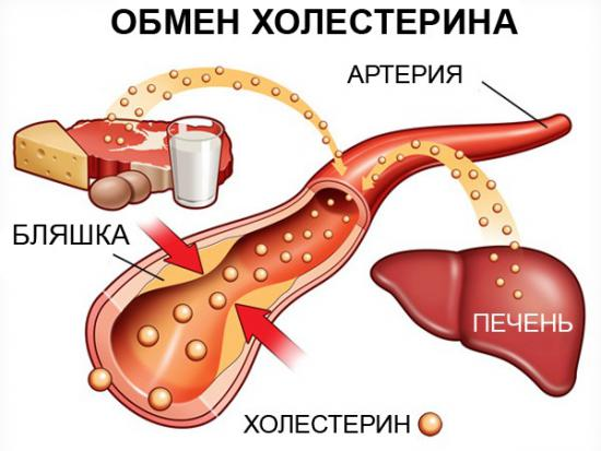 уровень холестерина в крови