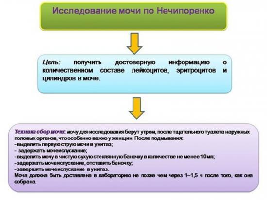 лейкоциты в моче норма у женщин