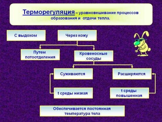 нарушение терморегуляции симптомы