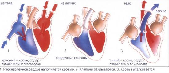 Лекарство для сердечной мышцы