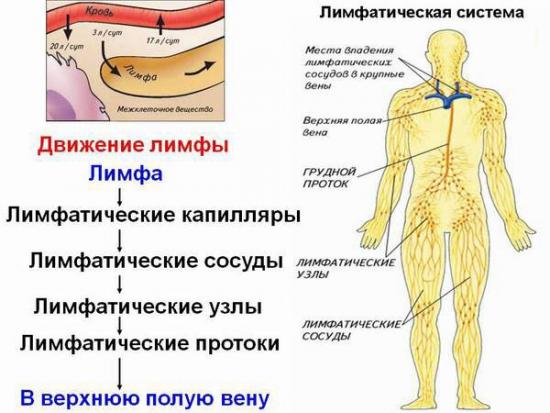 система лимфотока