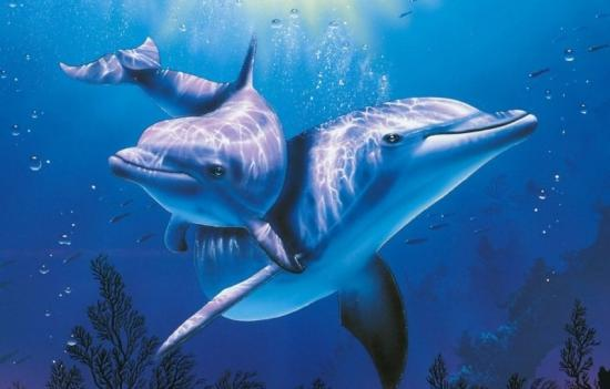 физиологические адаптации, примеры дельфины