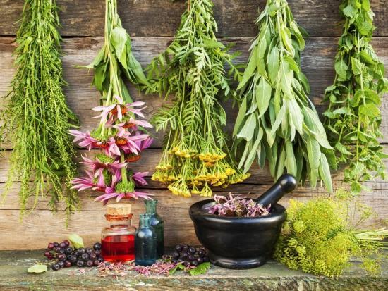лечебные травы для чистки печени