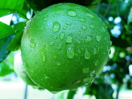 фрукт свити в чем польза