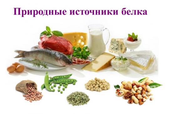 источник белка