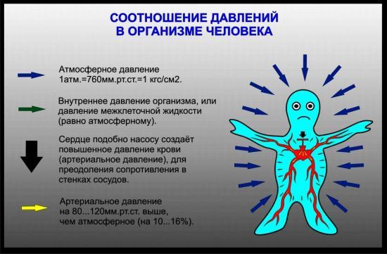 какие факторы формируют артериальное давление у человека