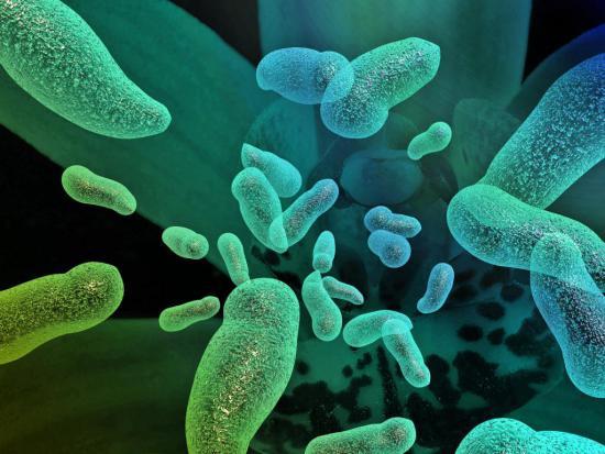 При нарушении микрофлоры кишечника страдает весь организм