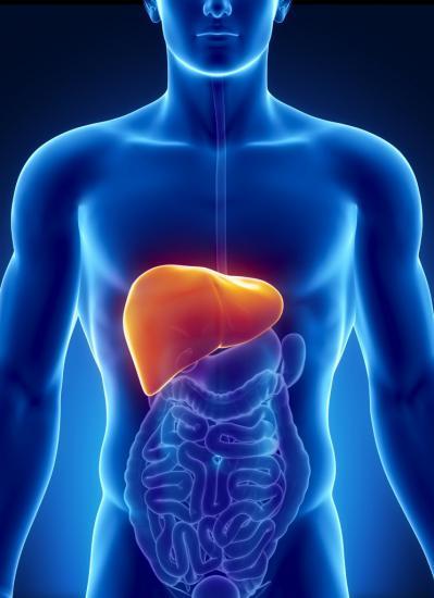 Группа заболеваний печени носит название гепатит