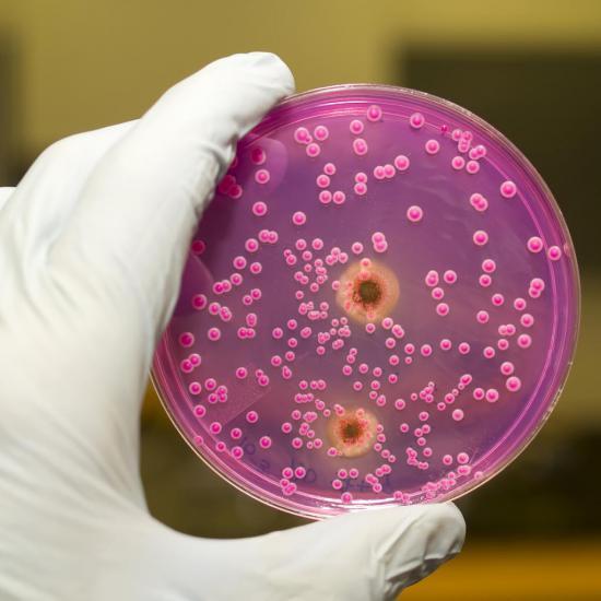 Возбудители молочницы становятся более устойчивыми к лекарственным средствам