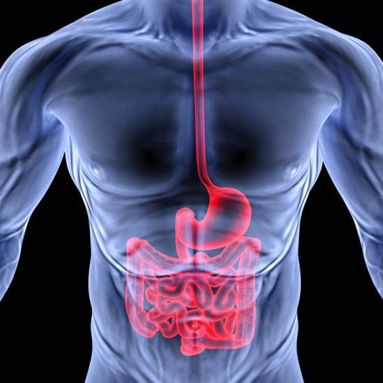 Для кишечника характерно наличие изгибов и петель