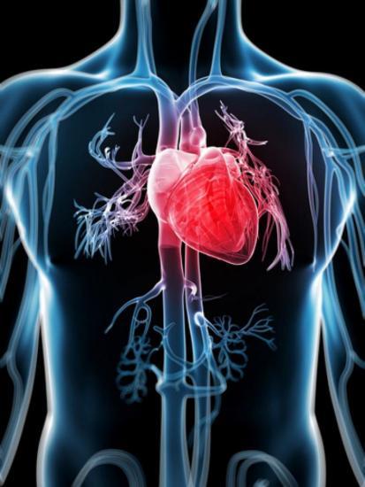Фосфатная буферная система располагается в крови в незначительном количестве