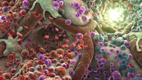 Лейкоциты могут попадать в сосудистые стенки