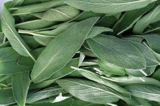можно ли пить травяной чай при похудении