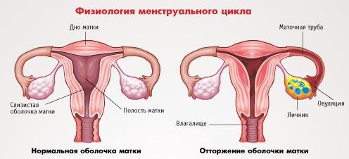 средства избавления от паразитов в организме человека