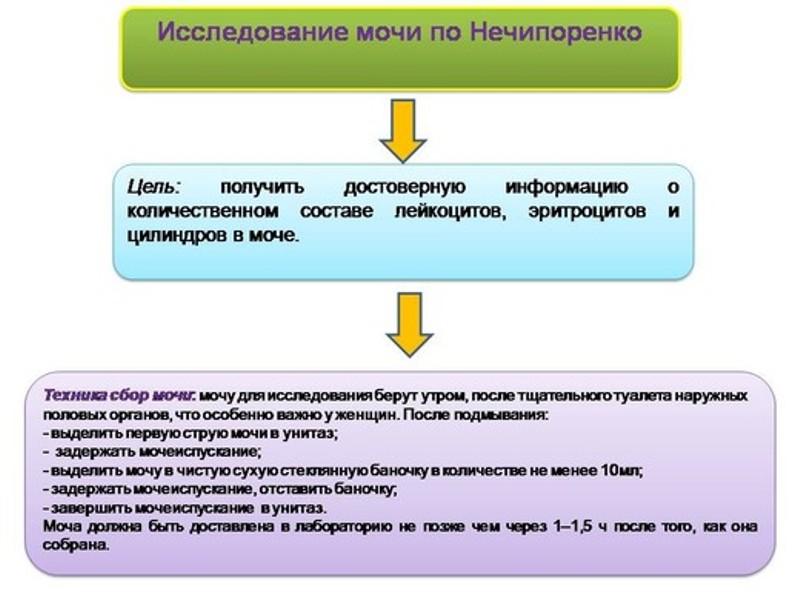 Как собрать анализ по нечипоренко у беременных 55