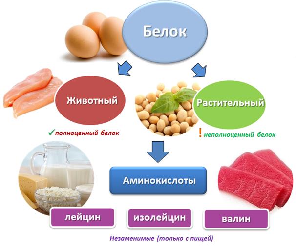 белковая пища список продуктов для похудения меню