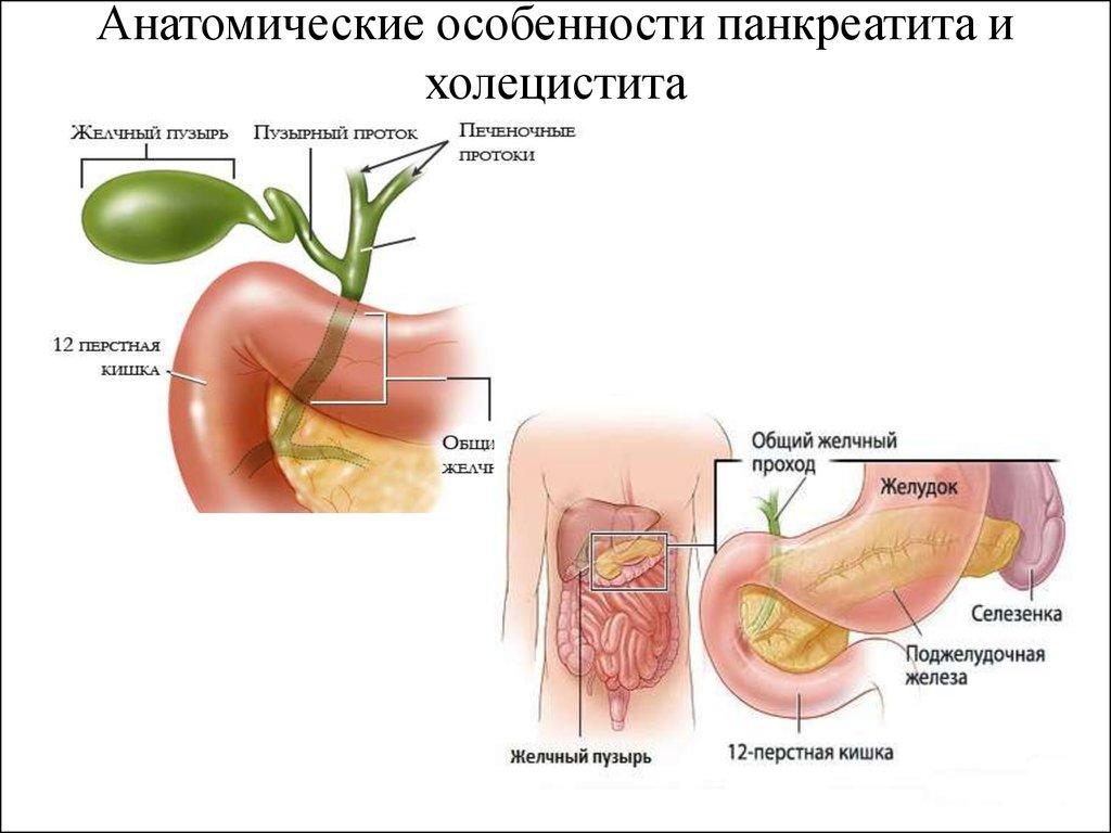 Холецистит и его лечение в домашних условиях 899