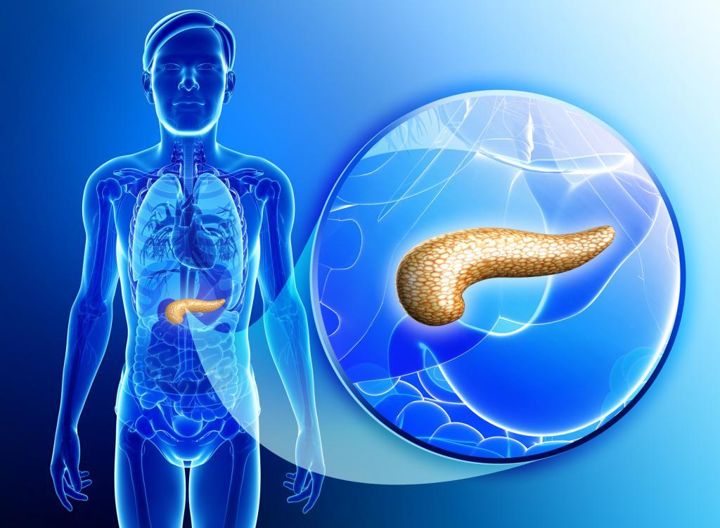 какой орган вырабатывает холестерин в организме человека