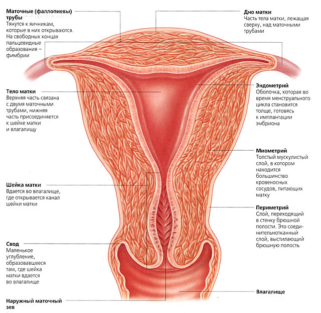 Осмотр у гинеколога видео эндометрит фото 451-728